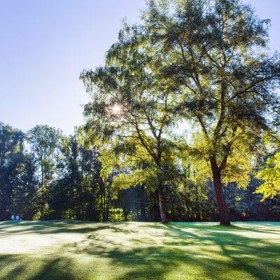 Bäume und Natur auf dem Gold Club Gelände.
